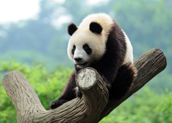 Panda 20 rolled out on September 27, impacting 2.4 percent of queries.