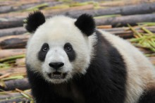 Google rolled out Panda 21 on Tuesday, and the iteration impacted 1.1 percent of search queries.